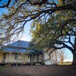 Oak trees with Farmhouse